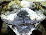 Smiling Bulldog's Stuff