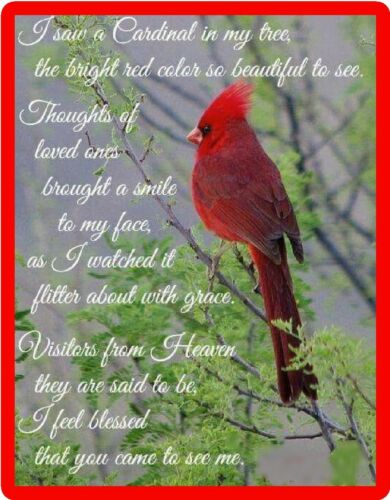 Insprirational Red Cardinal Blessed Bird Refrigerator Fridge Magnet Gift Item