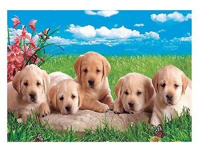 3D Lenticular Poster - Labrador Pup -12 x16 Print
