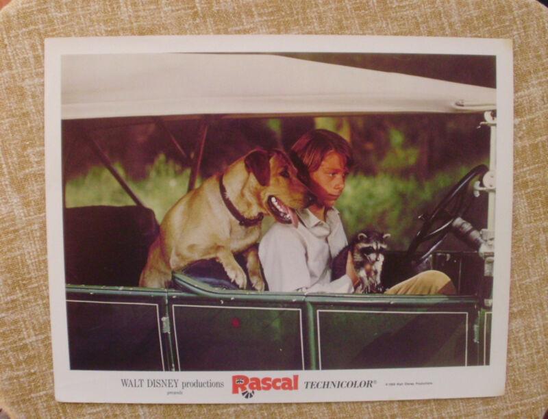 Rascal, Walt Disney Lobby Card, 1969, Walt Disney Productions, Technicolor
