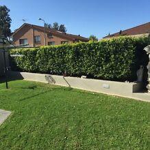 Cheap lawn mowing & garden maintenance Fairfield Fairfield Area Preview