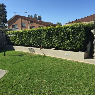 Cheap lawn mowing , garden maintenance, tree pruning etc Fairfield Fairfield Area Preview