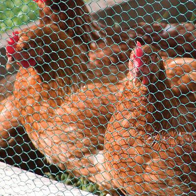 PVC Chicken Wire 1 Meter Tall 25mm Holes 50 Meter Bird Aviary Mesh / Netting