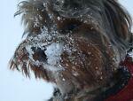 dogsrus3