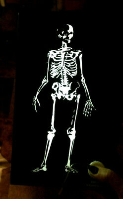 NWT $28 Halloween Xray Skeleton LED Medical Sign Goth Steampunk Decor Decoration