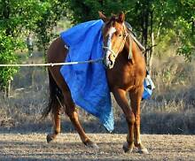 CHEEKY WITTY FILLY TO GO ON Gracemere Rockhampton City Preview