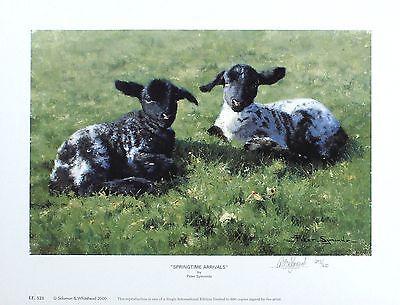 """PETER SYMONDS """"Springtime Arrivals"""" lambs SIGNED LTD ED SIZE:27cm x 36cm NEW"""