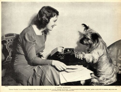 1930s Antique SKYE TERRIER Dog Print Champion Stormy Weather Skye Terrier 3511-C