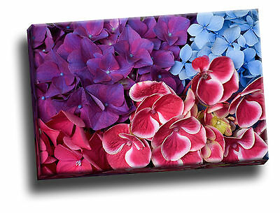 Hydrangea Giclee Canvas Art (Hydrangea Blossoms Giclee Canvas Wall Art Picture)