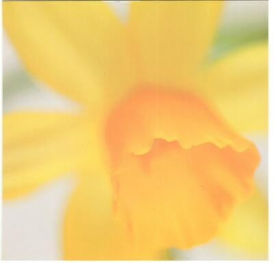 Easter Verses For Cards (Blank Verse Card For All.Daffodil Design For Birthday,Get Well, Thanks,)