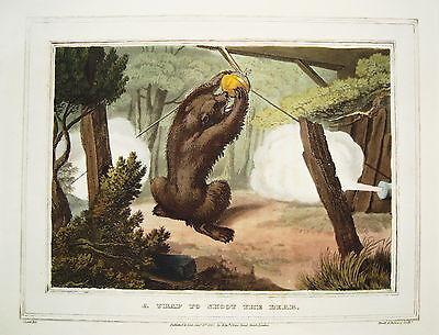 Bär Bärenjagd Schußfalle seltener altkolorierter Kupferstich in  Aquatinta 1813