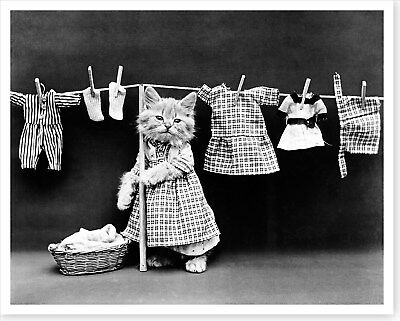 - 1914 Wash Day Cat Hanging Laundry Harry Whittier Frees Silver Halide Photo