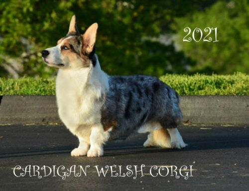 2021 CARDIGAN WELSH CORGI ADULT CALENDAR