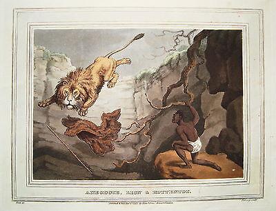 Löwenjagd Löwe Afrika Hottentotte altkolorierter Kupferstich in  Aquatinta 1813