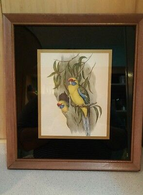 1951 Boston Store Botanical Parrots vtg  Franklin Picture Frame Chicago glass