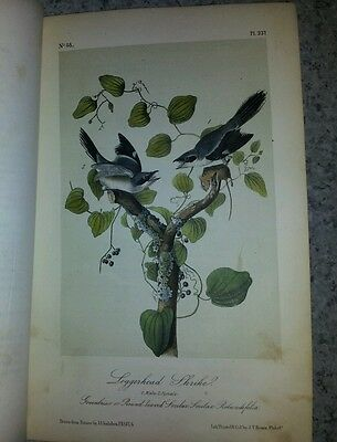 Audubon's Birds of America, Very Rare Vol. IV, Pub. 1856 Colored Bird's Plates
