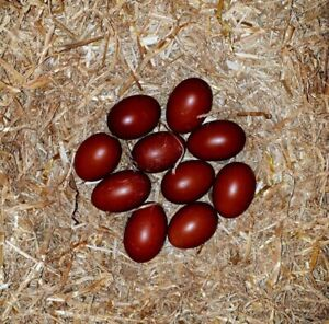 FRENCH MARANS FERTILE CHICKEN EGGS Bowral Bowral Area Preview