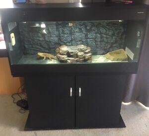 Reptile enclosure & pet package Glenwood Fraser Coast Preview