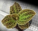 Forestfloororchids&plants