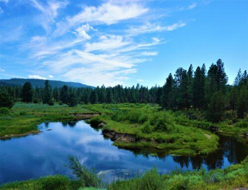 1.49 AC~OREGON LAND~GORGEOUS~SUPER RARE~NEAR CALIFORNIA ~NEAR NAT FOREST