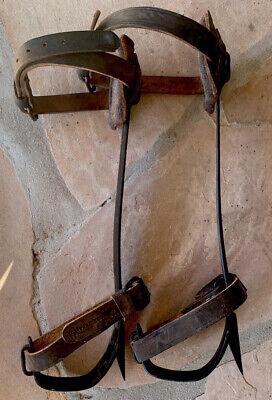 Buckingham Co 18 Steel Poletree Climbing Spursspikesgaffs Kit