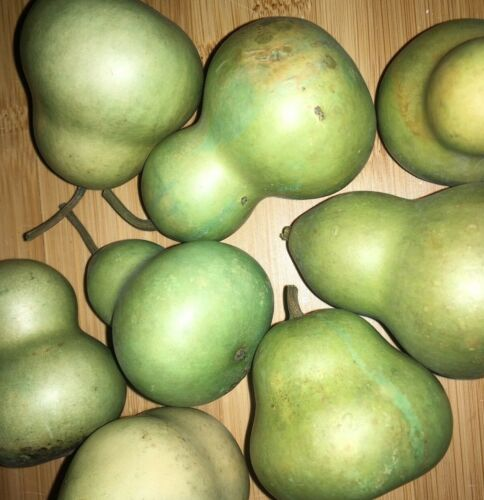 8 Dried Mini Pear Gourds Natural Primitive Botanical Autumn Fall Potpourri