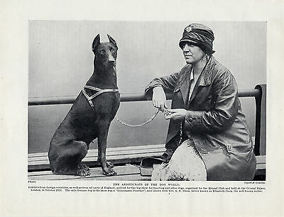 DOBERMAN PINSCHER LADY AND DOG AT SHOW OLD ORIGINAL DOG PRINT PAGE FROM 1934