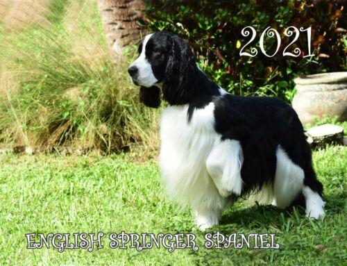 2021 ENGLISH SPRINGER SPANIEL CALENDAR