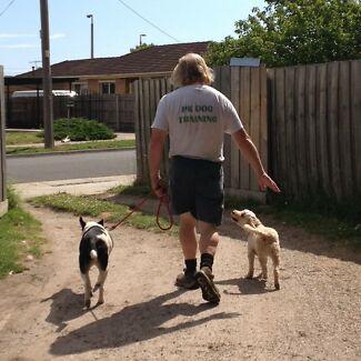 Dog training classes Monday nights Pakenham