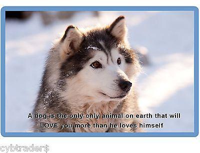 Siberian Husky Dog  Refrigerator / Tool  Box  Magnet Gift Card Insert #3