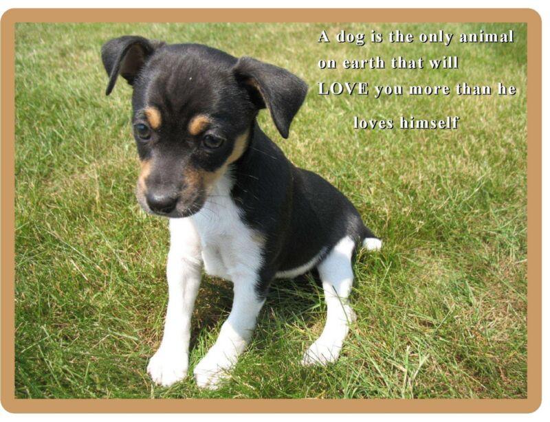 Cute Rat Terrier  Puppy / Dog Refrigerator  / Tool Box Magnet / Gift Card Insert