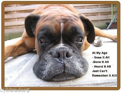 Funny Old Boxer Dog Forgetting Refrigerator / Tool Box Magnet Gift Card Insert