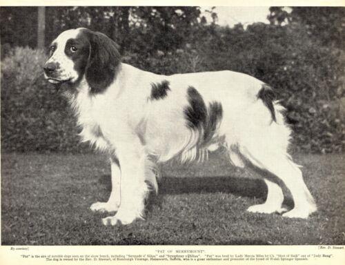 1930s Antique Welsh Springer Spaniel Print Pat of Merrymount Springer 3523-Q