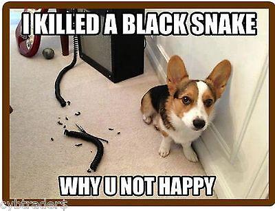Funny Corgi  Dog  Snake Refrigerator / Tool Box  Magnet