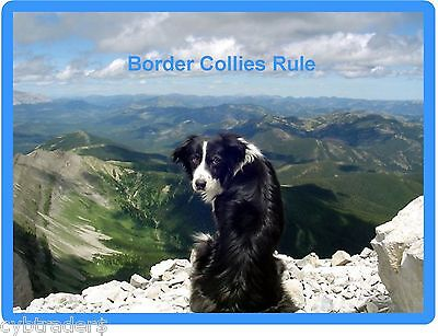 Border Collie Dog Scene Refrigerator / Tool Box Magnet