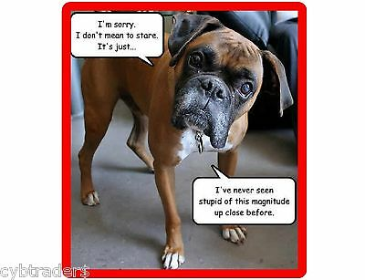 Funny Dog Boxer Stupid Refrigerator / Tool  Box / Locker  Magnet Gift Card Item