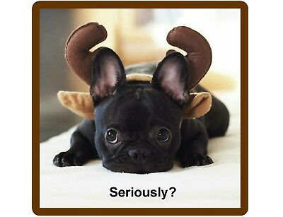 Funny French Bull Dog Horns Refrigerator / Tool Box  Magnet Gift Card Insert
