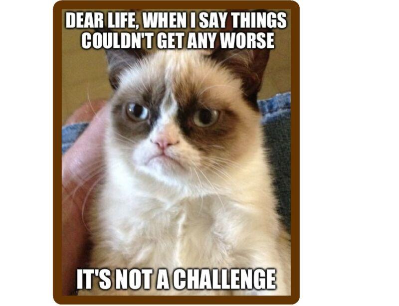 Funny Grumpy Cat Challenge  Refrigerator / Locker  Magnet