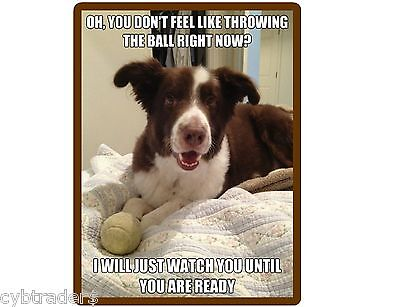 Funny Dog Border Collie Ball Throw  Refrigerator / Tool Box  Magnet