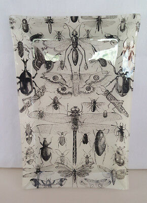 Halloween Insect Bug Design Glass Serving Tray - Beetle Cricket Dragonfly etc. - Halloween Chalk Designs