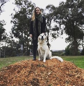 Woof Tribe - Dog walking, socialising & errands Eltham Nillumbik Area Preview