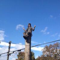 Emondage elagage arbre mort branches tree pruning