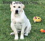 Body Jewelry One