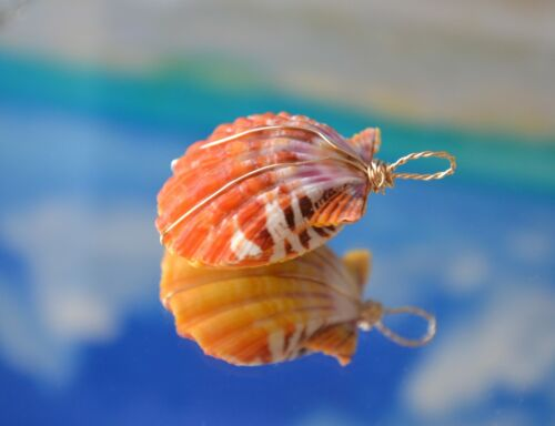 Natural Hawaiian Sunrise Shell Pair Double-sided Pendant on 14K Solid Gold Wire