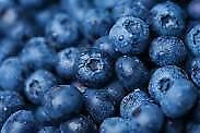 Wild fresh and frozen (great for baking) blueberries