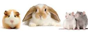 Bunny and Guinea Pig Sitting-St.Vital location