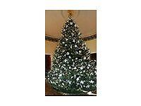 Christmass tree massive tree for sale