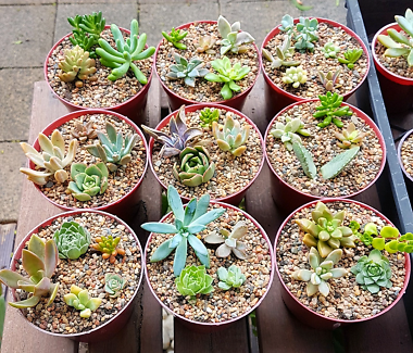 Mixed succulent pots Maryland Newcastle Area Preview