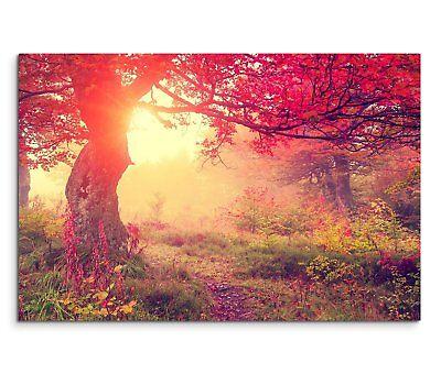 Baum im Herbst bei Sonnenaufgang mit roten Bättern