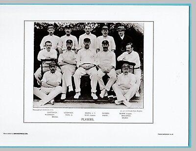 CRICKET  -  UNMOUNTED CRICKET TEAM PRINT - PLAYERS - 1894